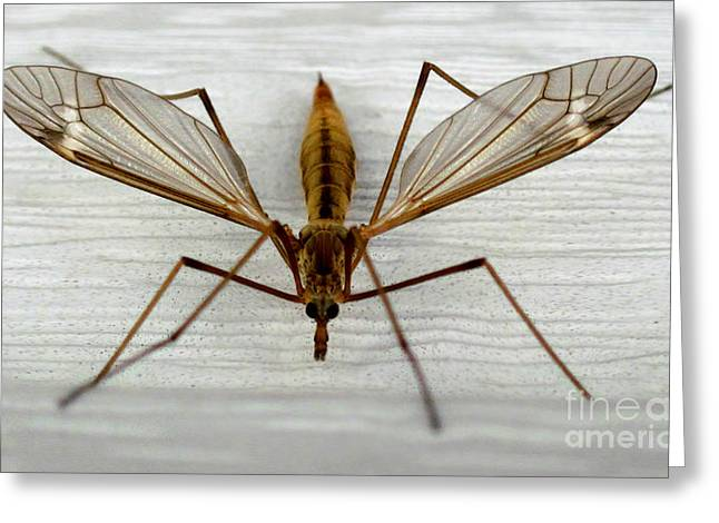Mosquito Hawk Greeting Card by The Kepharts