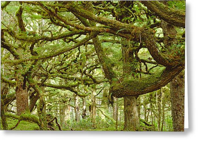 Moss-covered Trees Greeting Card by David Nunuk
