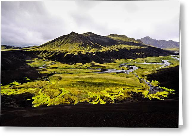 Moss In Iceland Greeting Card