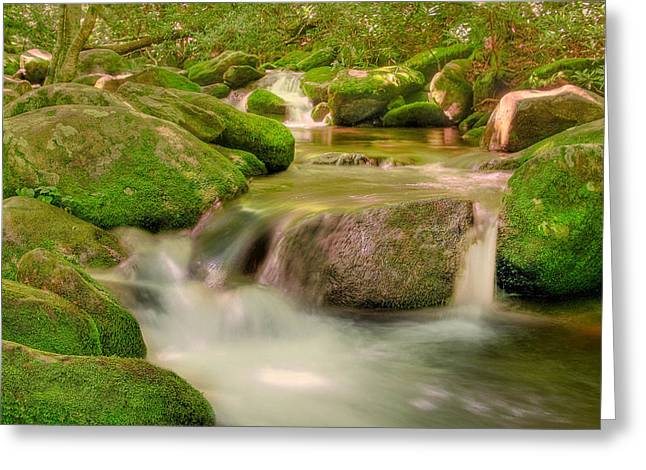 Greeting Card featuring the photograph Mossy Beauty by Cindy Haggerty