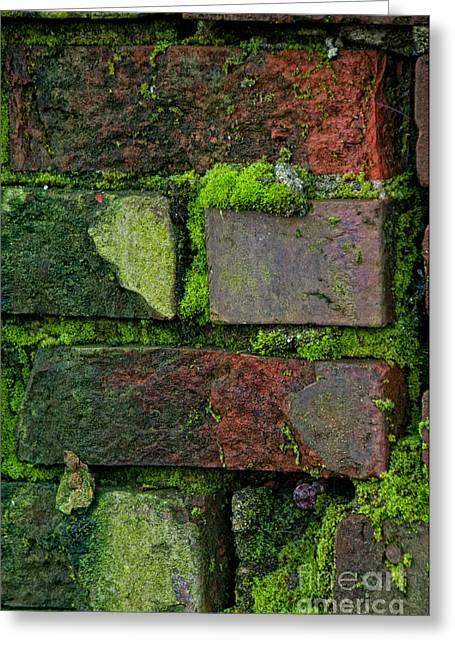 Mossy Brick Wall Greeting Card by Carol Ailles