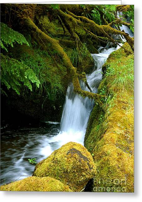 Mossy  Greeting Card by Johanne Peale