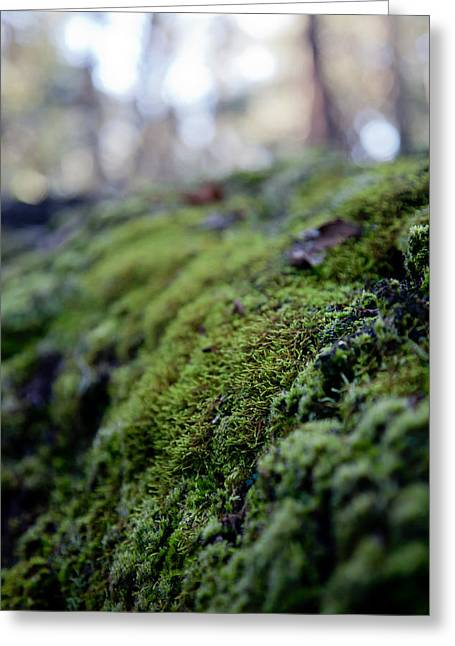 Mossy Log Greeting Card
