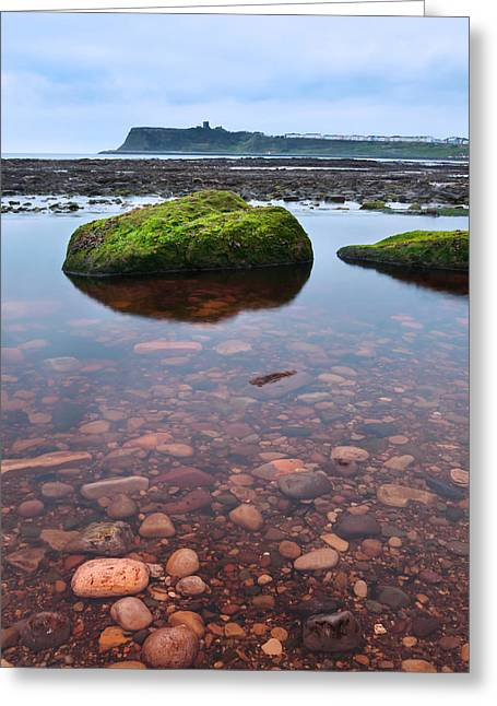 Mossy Rock Greeting Card by Svetlana Sewell