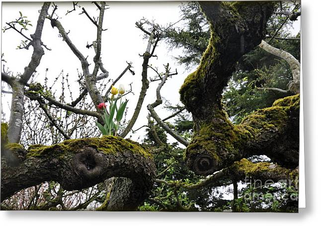 Greeting Card featuring the photograph Mossy Tree by Tanya  Searcy