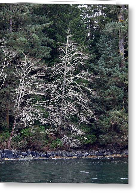 Mossy Trees Greeting Card by Jim Moore
