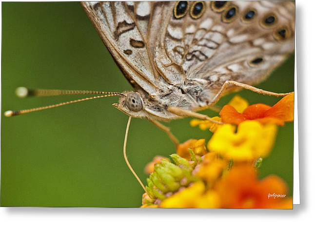 Moth On Flower Clusters Greeting Card