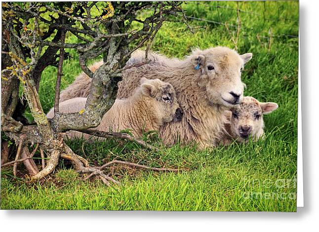 Mother And Babies Greeting Card by Jason Connolly