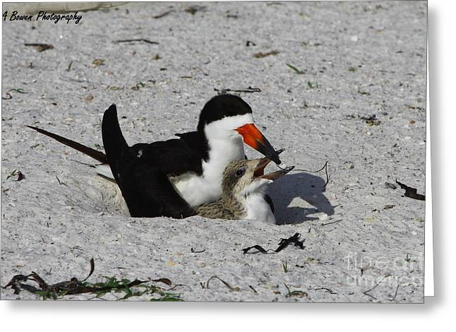 Mother And Baby Black Skimmer Greeting Card by Barbara Bowen