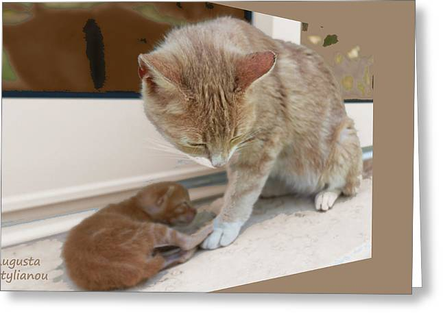 Mother And Kitten Greeting Card