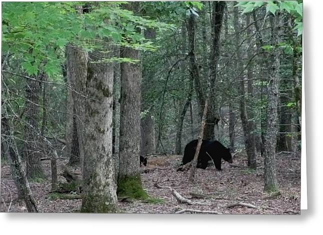 Mother Bear And Cub In Woods Greeting Card by Kathy Long