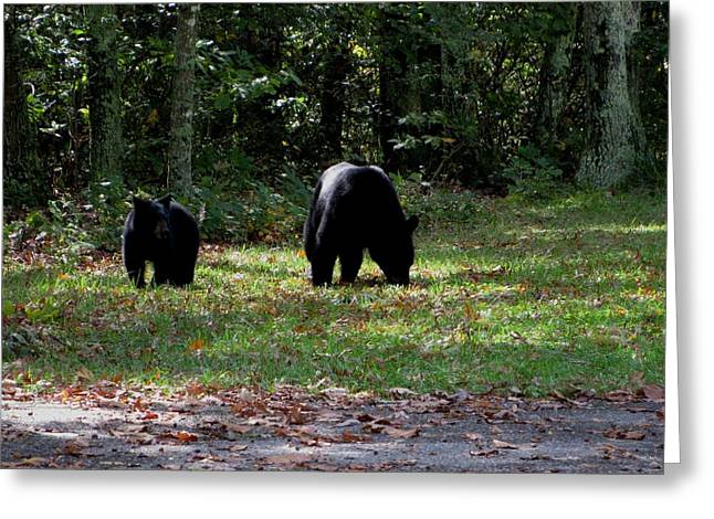 Mother Bear And Cub Greeting Card by Kathy Long