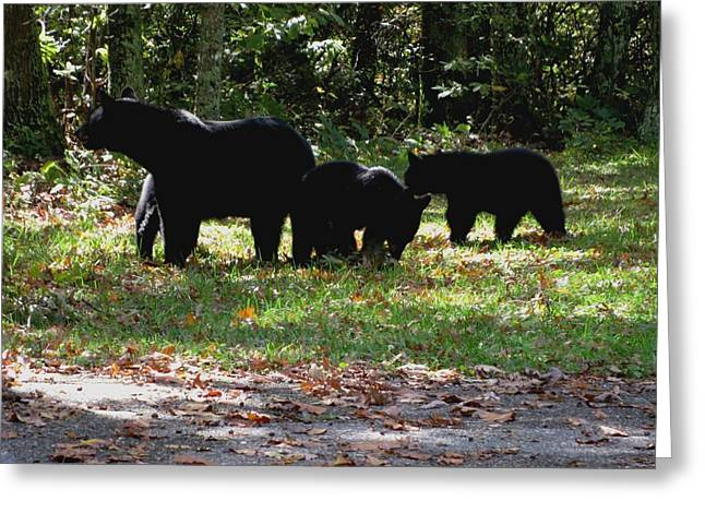 Mother Bear And Three Cubs Greeting Card by Kathy Long