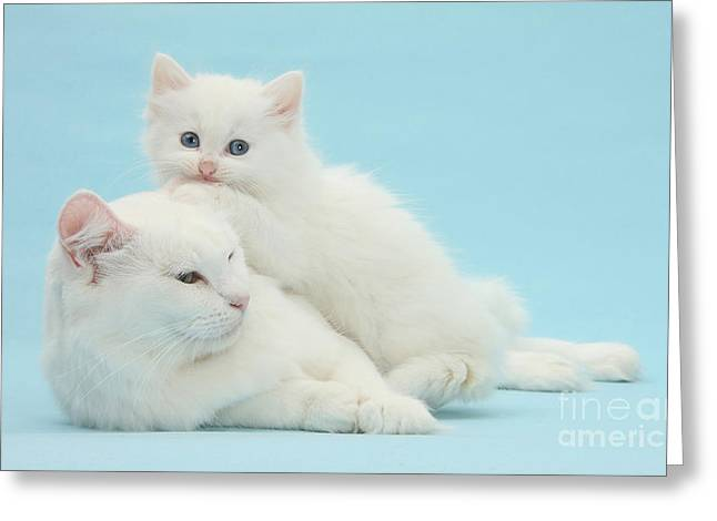 Mother Cat With Kitten Greeting Card by Mark Taylor