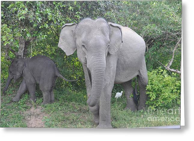 Mother Elephant And Baby Greeting Card
