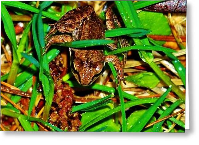 Mother Frog Greeting Card by Virginia Lei Jimenez