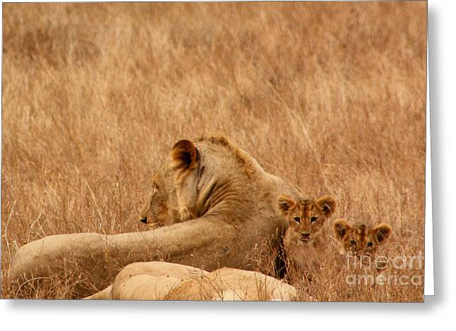 Mother Lion With Family Greeting Card