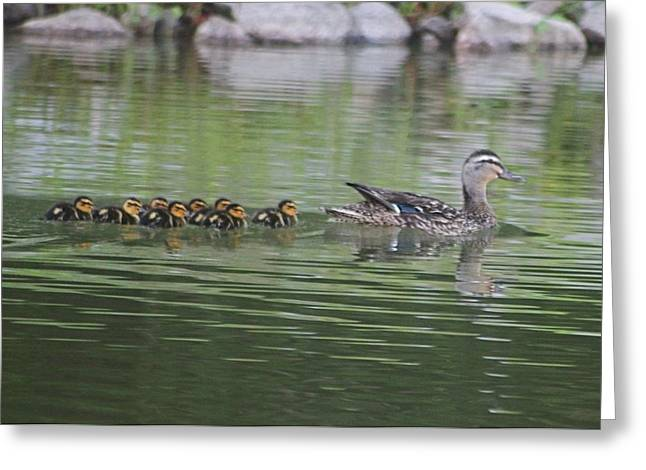 Mother Mallard And Ducklings Greeting Card by Jeanne Kay Juhos