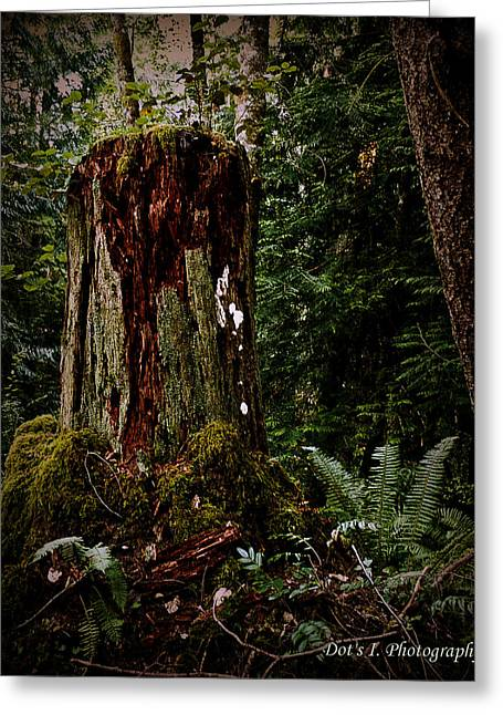 Mother Stump Greeting Card by Dorothy Hilde