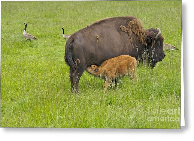 Mother's Milk Greeting Card by Sean Griffin
