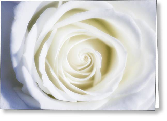 Mother's White Rose Greeting Card