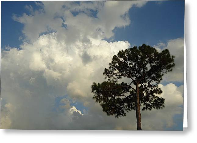 Mottled Clouds And Scrub Pine Greeting Card by Debbie Wassmann