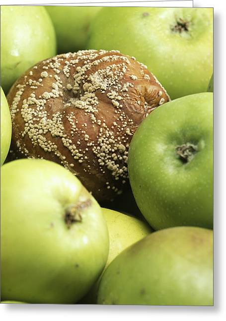 Mouldy Apple Greeting Card by Sheila Terry