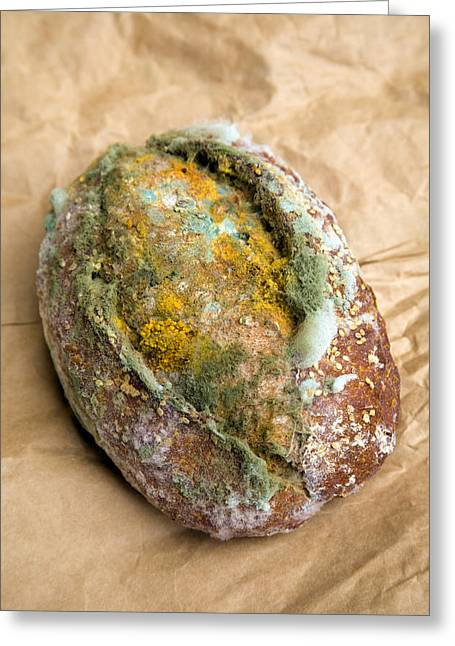 Mouldy Bread Roll Greeting Card by Veronique Leplat