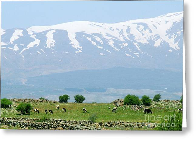 Mount Hermon Greeting Card by Issam Hajjar