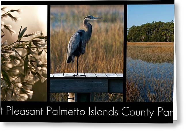 Mount Pleasant Palmetto Islands County Park  Greeting Card by Melissa Wyatt