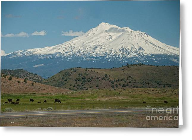 Mount Shasta Greeting Card by Carol Ailles