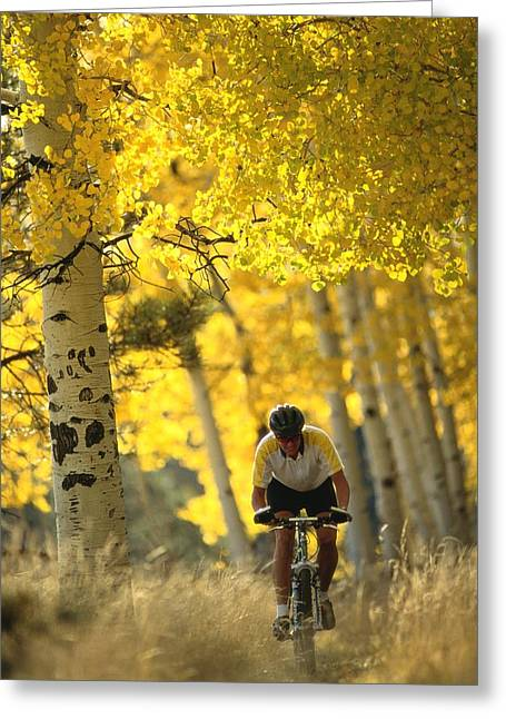 Mountain Biking Through A Grove Greeting Card by Bill Hatcher