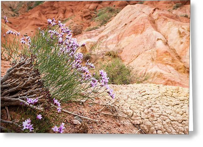 Mountain Flowers Greeting Card by Konstantin Dikovsky