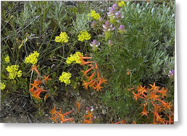 Mountain Flowers, Usa Greeting Card