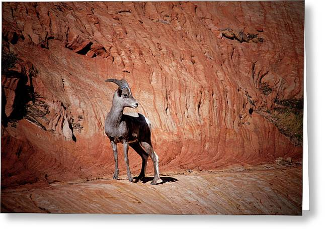 Mountain Goat Zion National Park Greeting Card