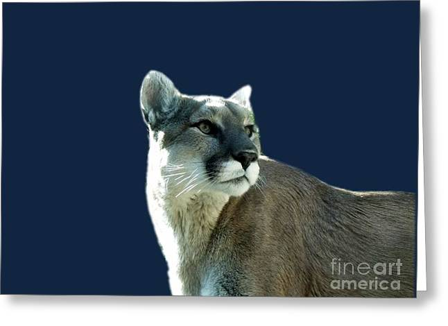 Mountain Lion Beauty Greeting Card by Donna Parlow