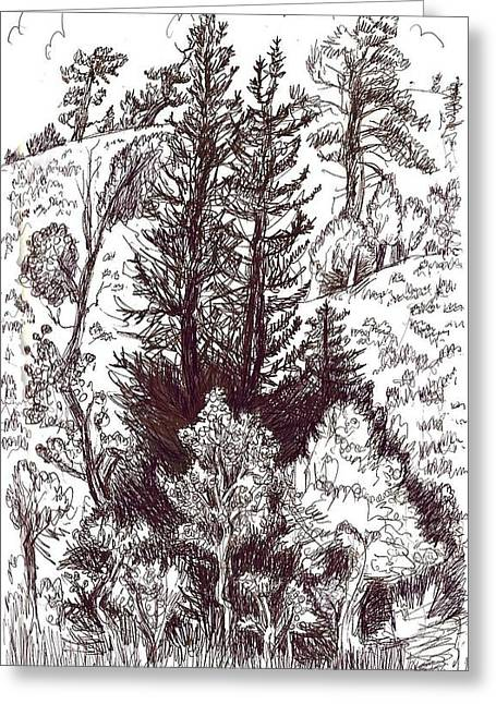 Mountain Pines And Aspen Field Sketch Greeting Card by Dawn Senior-Trask
