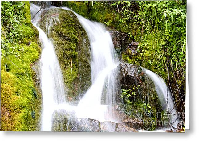 Mountain Spring 3 Greeting Card by Janie Johnson