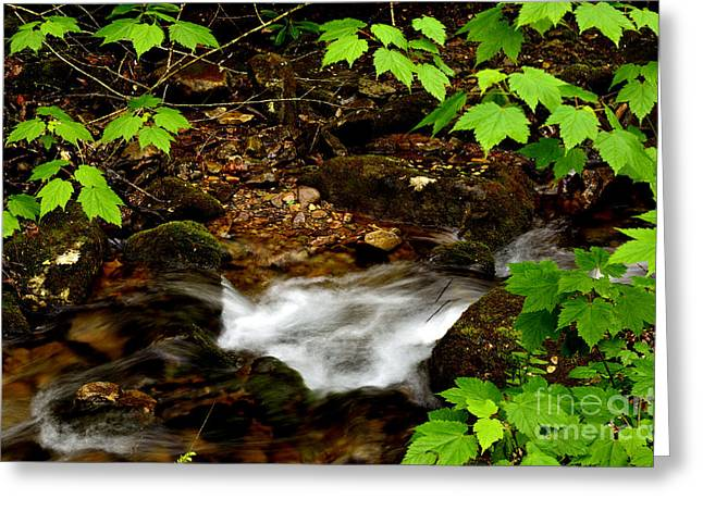 Mountain Stream In Spring Greeting Card by Thomas R Fletcher