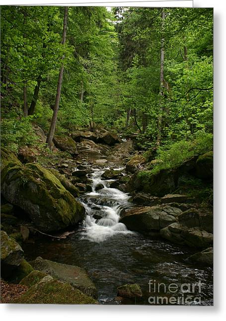 Mountain Stream Greeting Card by Torsten Dietrich
