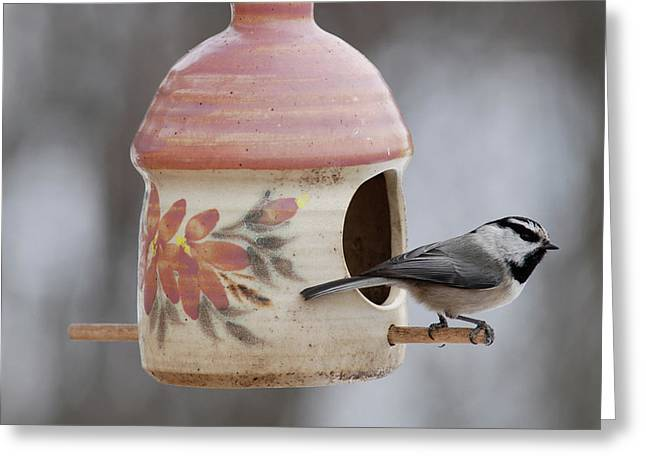 Mountian Chickadee At Feeder Greeting Card