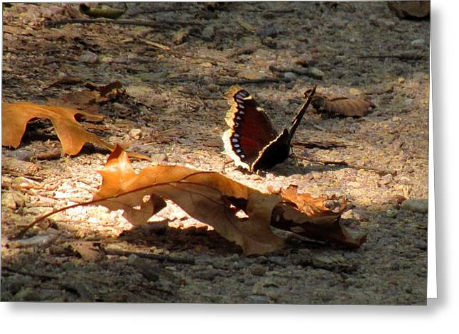 Mourning Cloak Greeting Card by Marilyn Smith