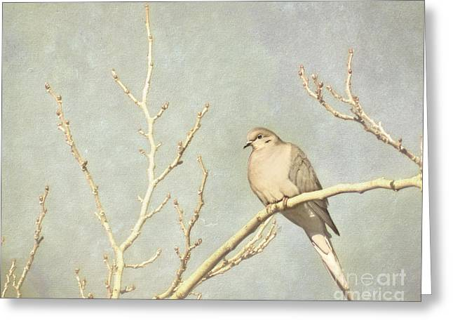 Mourning Dove In Winter Greeting Card