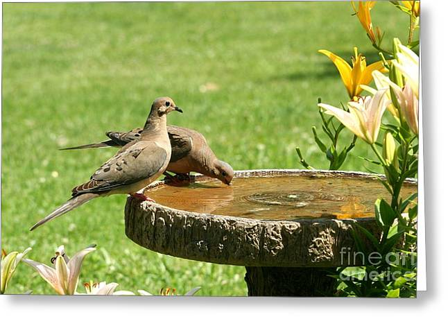Greeting Card featuring the photograph Mourning Doves by Jack R Brock