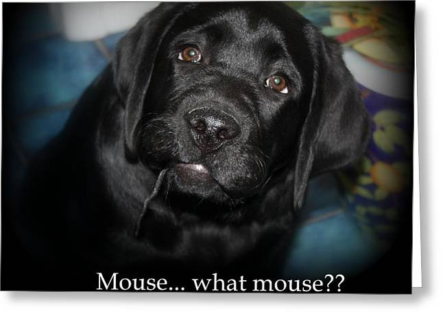 Mouse---what Mouse Greeting Card