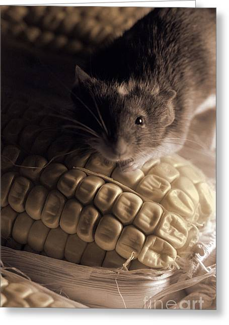 Mouse And Field Corn Greeting Card by Janeen Wassink Searles