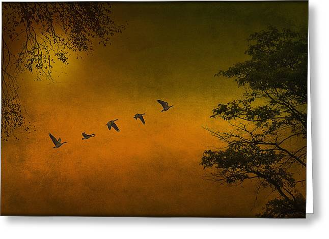 Moving On Greeting Card by Tom York Images