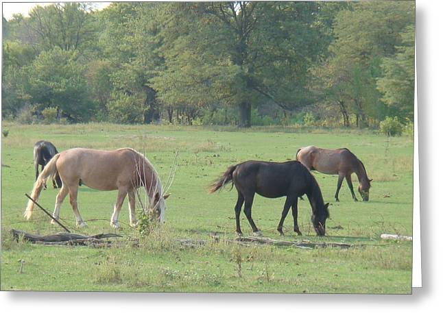 Greeting Card featuring the photograph Mowing The Lawn by Bonfire Photography