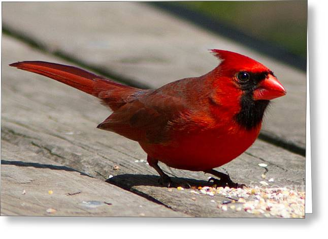Mr. Cardinal Greeting Card