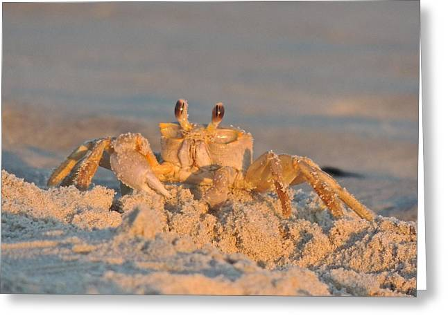 Mr. Crabby Greeting Card